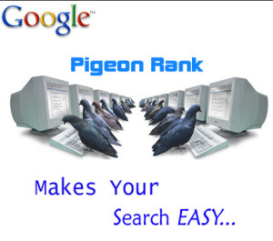 google pigeon image
